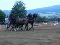 fahrturnier-2011-125-klein