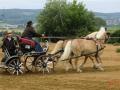 fahrturnier-2011-167-klein