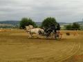 fahrturnier-2011-198-klein