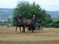 fahrturnier-2011-205-klein