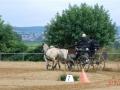 fahrturnier-2011-237-klein