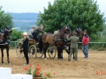 fahrturnier-2011-268-klein
